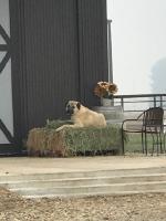 Daily Life on the Farm_13